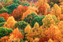 Woodland, Forest, Trees, Hills, autumn, deciduous