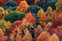 autumn, deciduous, forest