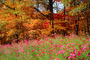 Woodland, Forest, Trees, Flowers, autumn, deciduous