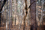 dry woodlands, Forest, trees, deciduous, NORV01P07_15