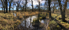 Panorama in Wooded Wetlands, Forest, Grass, Water, Swamp, NPND06_074