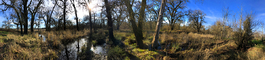 Panorama in Wooded Wetlands, Forest, Grass, Water, Swamp, NPND06_075