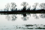 Lake, Bare Trees, Water, Reflection, calm, stillness, NPNV09P06_12