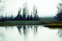 Lake, Bare Trees, Water, Reflection, calm, stillness, NPNV09P06_16