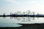 Lake, Bare Trees, Water, Reflection, calm, stillness, NPNV09P06_18