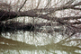 Lake, Bare Trees, Water, Reflection, calm, stillness, NPNV09P06_19