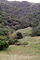 south of Petaluma, Sonoma County, Hills, Hillside, NPNV11P12_01