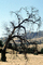 bare tree, sad, droopy, the lingering doubt of sadness, NPNV14P14_08