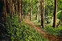 Trees, Woodland, Forest, hobbit path, trail, NPSPCD0653_022C