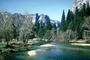 Merced River, Valley, forest, trees, NPYV01P01_04