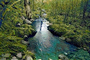 Magical Hobbit Forest, river in streaming bliss, Sedona, Oak Creek Canyon, NSAPCD3344_076B