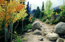 Path, Boulders, Rocks, Forest, Aspen Trees, Woodland, autumn, Equanimity, NSCV03P13_13
