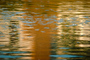 Wet, Liquid, Water, Ripples, Wavelets, NWEV01P02_01.2877