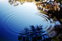 Concentric Ripples, Wave Propagation, Waves, Round, Circular, Circle, Wet, Liquid, Water, Pond, lake, Wavelets