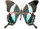 Butterflies, Wings, Butterfly, photo-object, object, cut-out, cutout, OECV02P06_06F