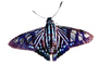 Butterflies, Wings, Butterfly, photo-object, object, cut-out, cutout, OECV02P06_11F