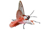 Sphinx Moth, photo-object, object, cut-out, cutout, OECV02P07_04F