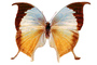 Butterfly, Wings, photo-object, object, cut-out, cutout, OECV02P08_13F
