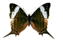 Butterfly, Wings, photo-object, object, cut-out, cutout, OECV02P09_05F