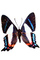 Metalmark Butterfly, (Ancyluris formosissimo), Riodinidae, Riodininae, Peru, photo-object, object, cut-out, cutout