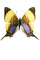Brushfooted Butterfly, Peru, photo-object, object, cut-out, cutout