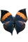 [Ithomyiidae], Butterfly, Wings, photo-object, object, cut-out, cutout