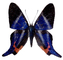Butterfly, photo-object, object, cut-out, cutout, OECV03P06_17F