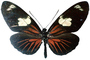 Butterfly, photo-object, object, cut-out, cutout, OECV03P06_18F