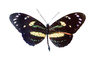 Butterfly, photo-object, object, cut-out, cutout, OECV03P06_19F