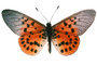 Butterfly, photo-object, object, cut-out, cutout, OECV03P07_05F