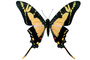 Butterfly, photo-object, object, cut-out, cutout, OECV03P07_17F