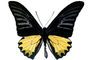 Butterfly, photo-object, object, cut-out, cutout, OECV03P07_19F