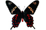 Butterfly, photo-object, object, cut-out, cutout, OECV03P08_02F