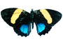 Butterfly, photo-object, object, cut-out, cutout, OECV03P08_07F
