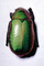 Green Beetle, scarab