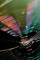 Chromatic Spectrum off a Spider Web, Rainbow Sheen, Mill Valley, California, OESV01P05_19.3302