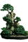 Kingsville Boxwood, (Buxus microphylia), photo-object, object, cut-out, cutout, OFBV01P02._15F