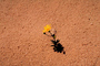 Tiny Flower in the Desert, Shadow, Utah