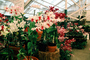 Greenhouse for Orchids