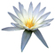 Water Lily, flower, photo-object, object, cut-out, cutout, OFWV01P11_08F