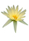 Water Lily, flower, photo-object, object, cut-out, cutout, OFWV01P11_09F
