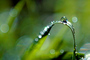 Blades of Grass, Dew Drops, Water Drops, Early Morning Dew, Waterlens