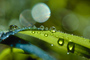 Blades of Grass, Dew Drops, Water Drops, Early Morning Dew, Waterlens, Bokeh