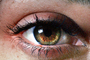 Eyes, Eyelash, skin, female, woman, eyebrow, Eyeball, Iris, Lens, Pupil, Cornea, Sclera