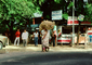 Woman Carries a Heavy Load on her Head, Ahmedabad, Gujarat, PDCV01P02_13