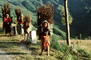 Girl Carrying Firewood, Desertification, wood bundle, twigs, Child-Labor, PDCV01P06_03
