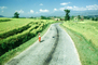 S-curve, Road, rice fields, PDCV01P06_07