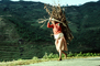 Woman carrying heavy load, barefoot, barefeet, deforestation, desertification, PDCV01P07_10