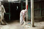 Woman Sweeping, India, PDGV01P02_05