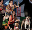 Howling, Baying, smiles, World's Ugliest Dog Contest, Sonoma-Marin Fair, 21/06/2019